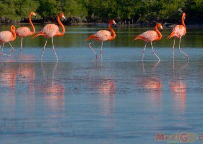 flamingo_galeria14