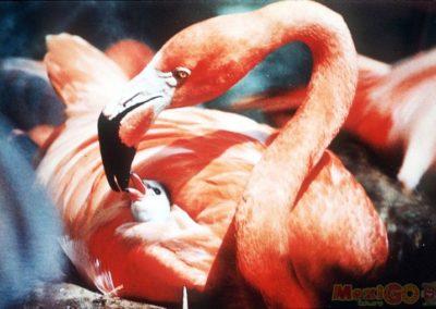 flamingo_galeria26