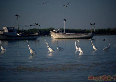 flamingo_galeria27