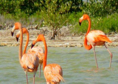 flamingo_galeria7