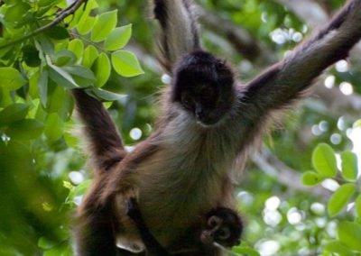 monkey_galeria10