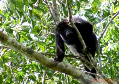 monkey_galeria13