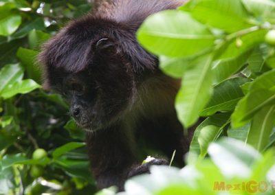 monkey_galeria16