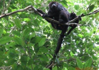 monkey_galeria4
